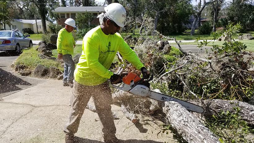 Tree Removal Charlotte Nc