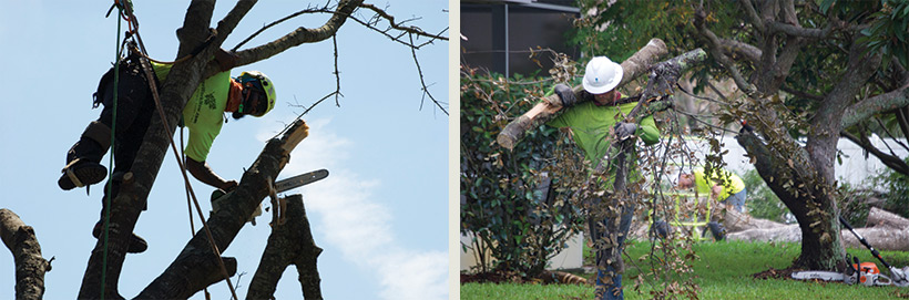 debris removal, tree removal, tree service, tree surgeon, large tree removal, tree cutting, tree companies, tree service cost, tree work now, fallen tree removal