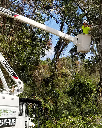 tree bucket truck, tree removal crane, tree climber, tree pruning, debris removal, tree removal, tree service, tree surgeon, large tree removal, tree cutting, tree companies, tree service cost, tree work now