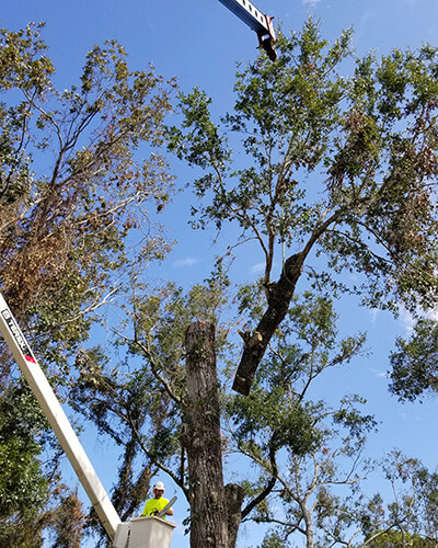 tree pruning, debris removal, tree removal, tree service, tree surgeon, large tree removal, tree cutting, tree companies, tree service cost, tree work now, fallen tree removal, dead tree removal, brush removal, tree debris removal, pine tree removal, oak tree removal, oak tree trimming, tree care professionals, tree branch removal