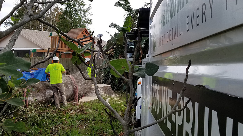 tree pruning, debris removal, tree removal, tree service, tree surgeon, large tree removal, tree cutting, tree companies, tree service cost, tree work now, fallen tree removal, dead tree removal, brush removal, tree debris removal, pine tree removal, oak tree removal, oak tree trimming, tree care professionals