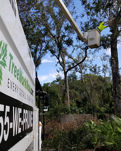 tree service, tree surgeon, large tree removal, tree cutting, tree companies, tree service cost, tree work now, fallen tree removal, dead tree removal, brush removal, tree debris removal, pine tree removal,