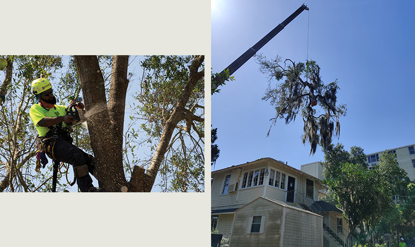 debris removal, tree removal, tree service, tree surgeon, large tree removal, tree cutting, tree companies, tree service cost, tree work now, fallen tree removal, dead tree removal, brush removal, tree debris removal