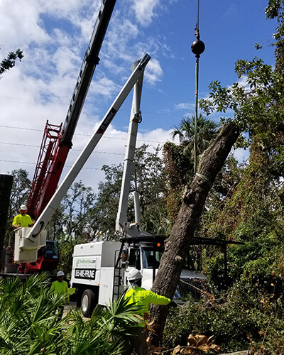 tree removal crane, tree climber, tree pruning, debris removal, tree removal, tree service, tree surgeon, large tree removal, tree cutting, tree companies, tree service cost, tree work now, fallen tree removal