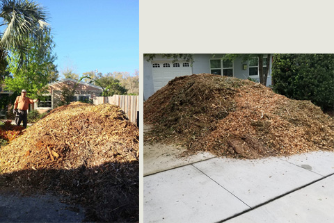 FREE Mulch Delivered in Orlando : Free Wood Chips Oviedo