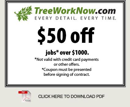Longwood Tree Removal : Oviedo Tree Services : Seminole