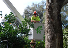 Tree removal in Orlando by crew member in bucket truck