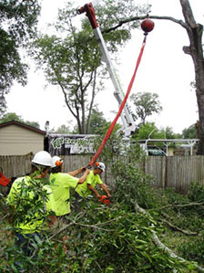 Orlando tree trimmer crew members using a crane to lift heavy limbs out of a yard safely